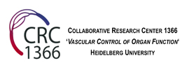Heidelberg University - DFG Collaborative Research Center 1366 - Vascular Control of Organ Function