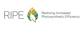 Realizing Increased Photosynthetic Efficiency (RIPE)