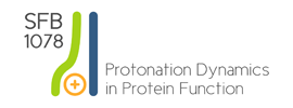 Freie Universität Berlin - Collaborative Research Center (Sonderforschungsbereich, SFB) 1078 - Protonation Dynamics in Protein Function